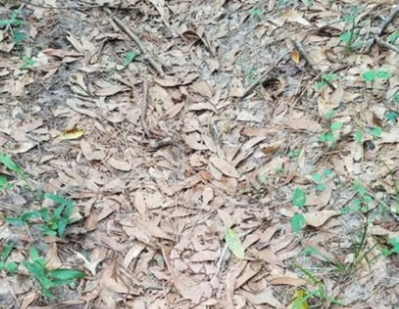 No one can find the snake hidden in this photo