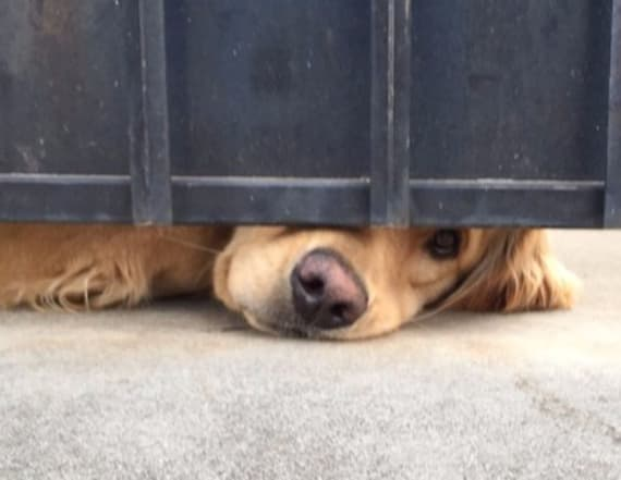 Sweet dog waits for his friend under gate all day