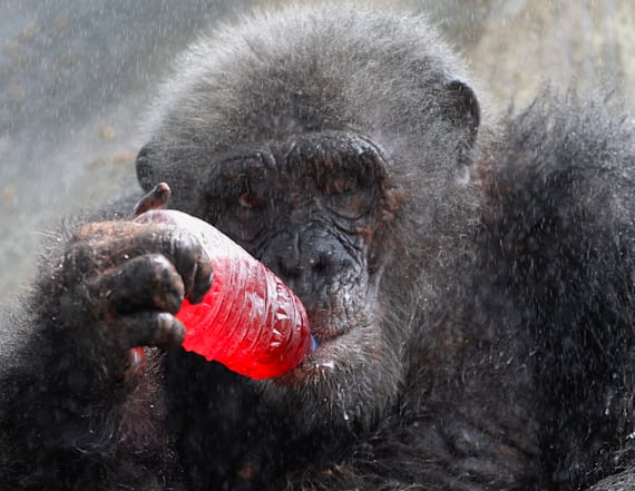 Bangkok zoo keeps animals cool from the heat