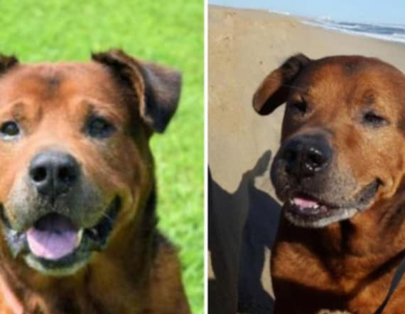 Animal shelter please for adoption of elderly dog