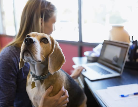 6 top reasons why pets should be allowed at work