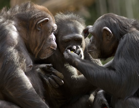 Study: The future looks very grim for primates