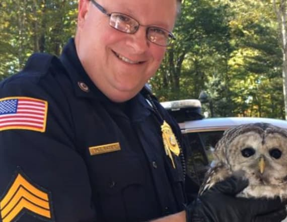 Kind cop rescues 2 injured owls in 3 months
