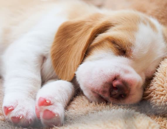 Study suggests puppies love one type of talk