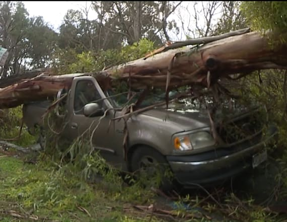 Trees in two cities fall on a man's vehicles