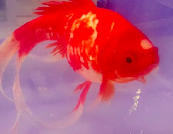 Luckiest fish survives out of water for 20 minutes