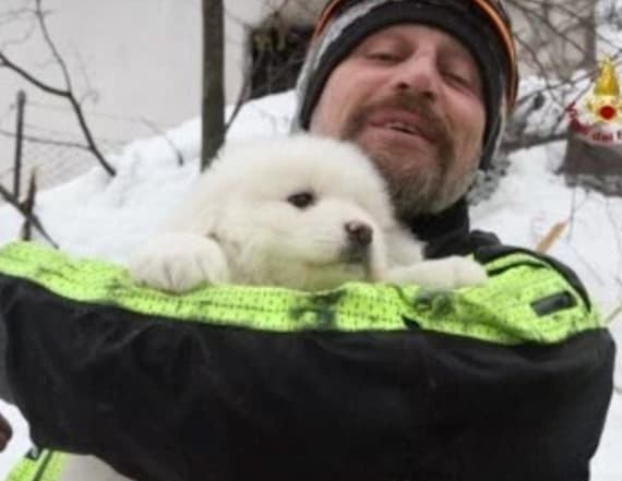 Puppies rescued from avalanche were celebrities