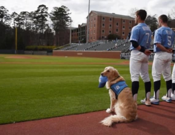 Golden retriever joins college baseball team