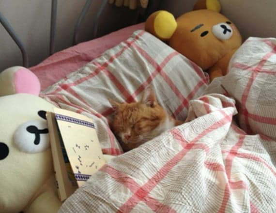 Cats cozily tucked into bed is the trend we need