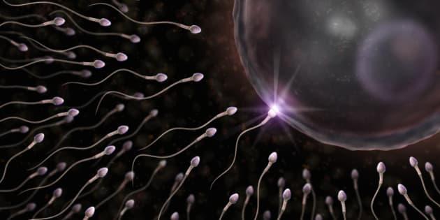 Temps rencontre spermatozoide ovule