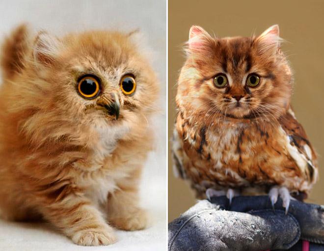 Cats + Owls = Meowls - Mandatory