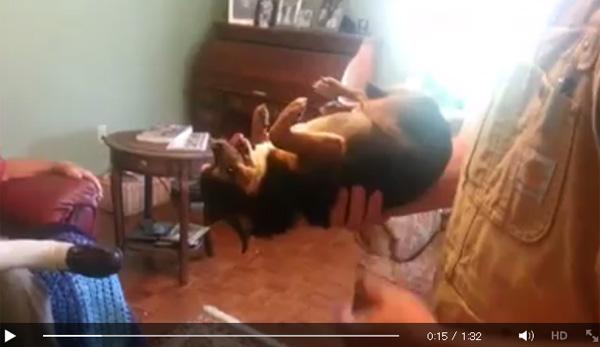 嫌いな人に抱っこされて思わず死んだフリをする子犬に世界が爆笑
