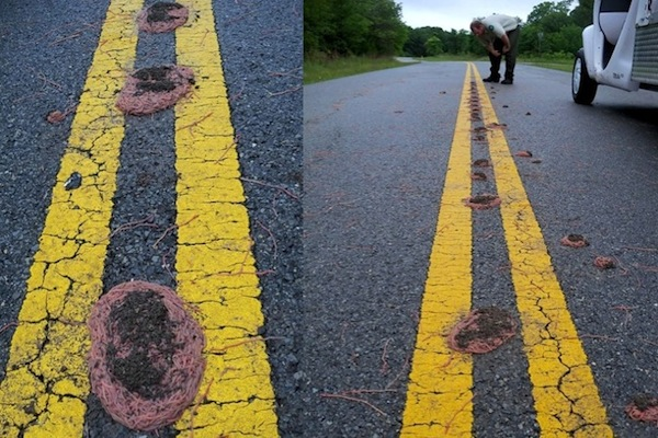 things you don't see every day, herds of earthworms texas flood
