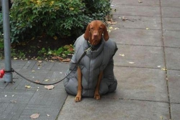 funny winter photos, funny snow photos, idiots in winter, dog in jacket
