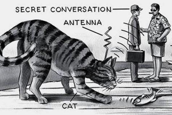 most hilarious moments from history, funny history, operation acoustic kitty, spy cats cold war