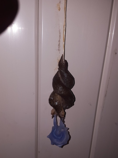 things you don't see every day, slugs making whoopee