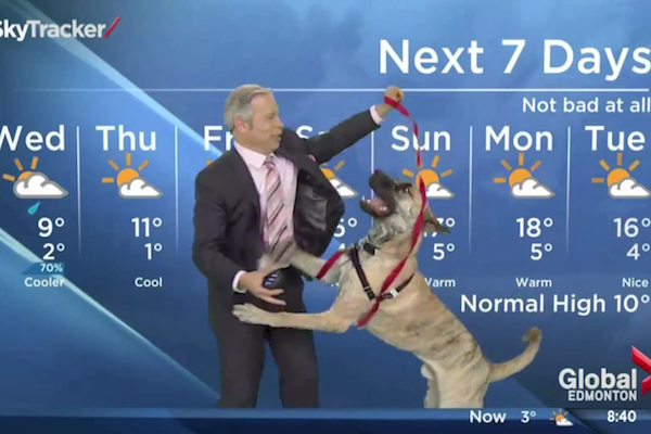 animals attacking reporters on TV, dog