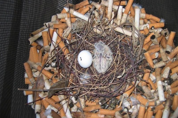things you don't see every day, urban bird nest