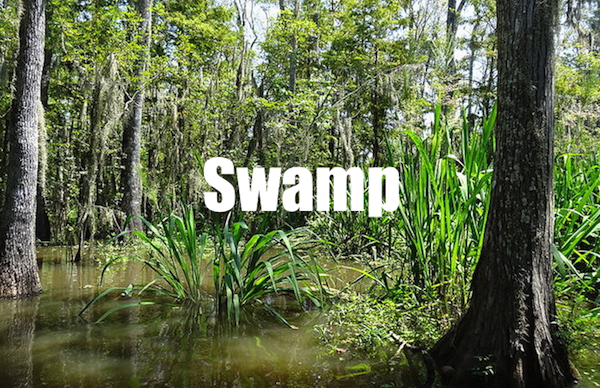50 words for 50 states, louisiana swamp