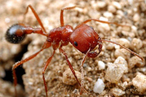 most venomous bugs