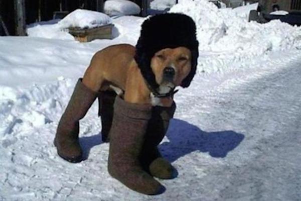 funny winter photos, funny snow photos, idiots in winter, winter clothes dog