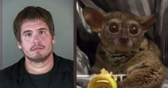 Nathan Allen McClain pays prostitute with girl scout money and bushbaby
