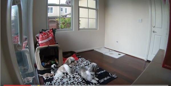 七感!两个可爱的太可爱的狗预见地震的震惊图像
