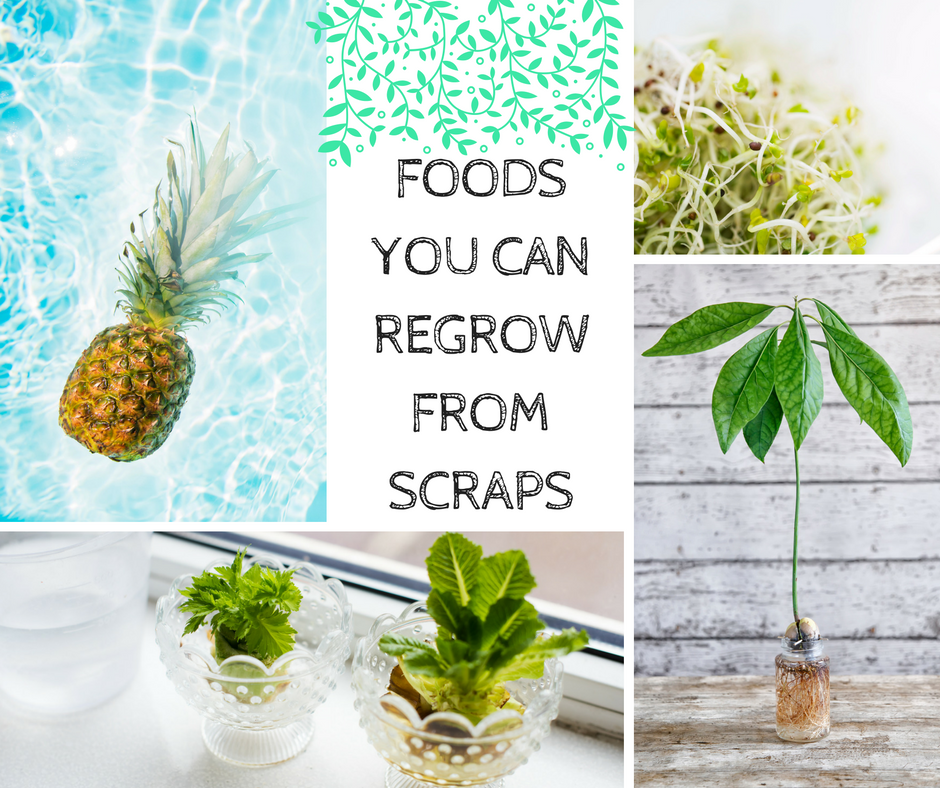 10 Fruit And Veggies You Can Actually Re-Grow From Scraps Growing Vegetables From Scraps