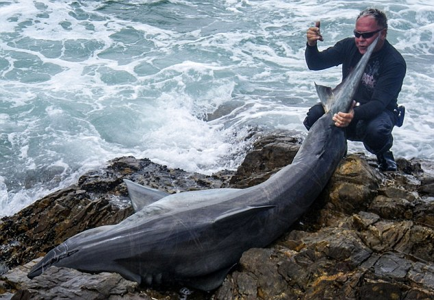 manliest photos on the internet, funny manly images, leon bekker kills great white shark