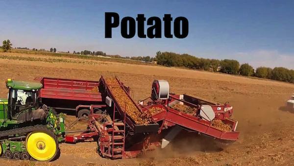 50 words for 50 states, idaho potato