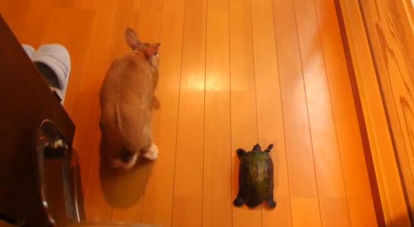 """它终于在连接的战斗中解决了!儿童故事""""兔子和乌龟""""真人版太搞笑了[视频]"""