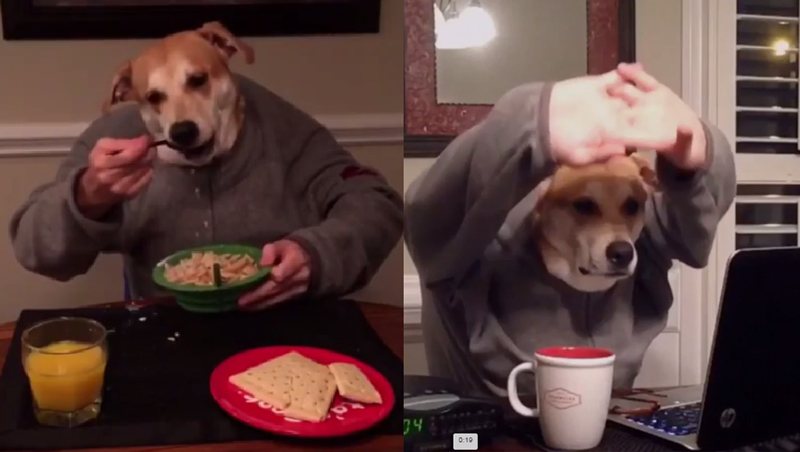 鼓掌一只狗继续表现比预期更好!清醒和丑陋的狗双人羽毛艺术[视频]