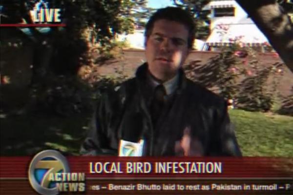 animals attacking reporters on TV, bird