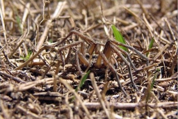 scary spider pics and gifs