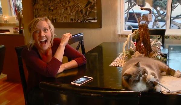 扰乱电视采访的猫太可爱[视频]