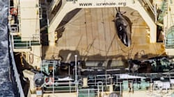 Japanese Vessel Caught With Dead Whale Onboard, Activist Group