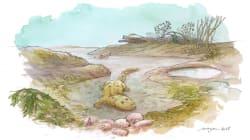 塩水を好んでいた初期の四肢類