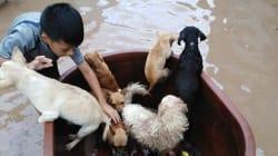 Un niño rescata perros, pericos y hasta un gallo de la inundación y se vuelve