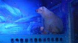 El oso más triste del mundo vive en un centro comercial en