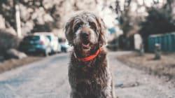 5 consejos para hacer a tu perro más