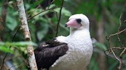 This Adorably Clumsy Aussie Bird Has a Ridiculous Name And a Big