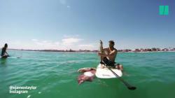 Ces amateurs de paddle ont rencontré un calamar géant