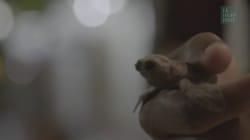 Le joli geste des équipes de tournage de la BBC pour des bébés