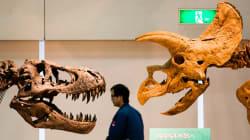 Descubierta una nueva especie de dinosaurio en