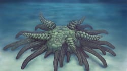 Scientists Discover Ancient 'Cthulhu' Fossil That Will Give You