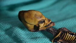 Strange 'Alien Skeleton' Mystery Finally