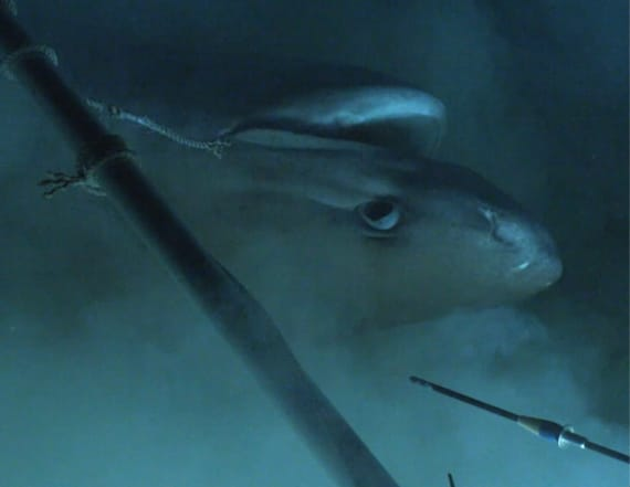 Researchers find shark that's older than dinosaurs