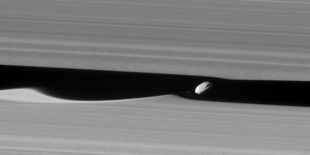 La lune Daphnis, entre les anneaux de Saturne, photographiée par Cassini.