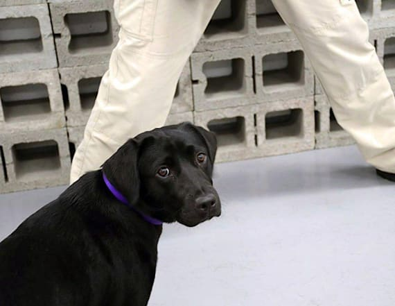 CIA fires dog because she didn't want to sniff bombs