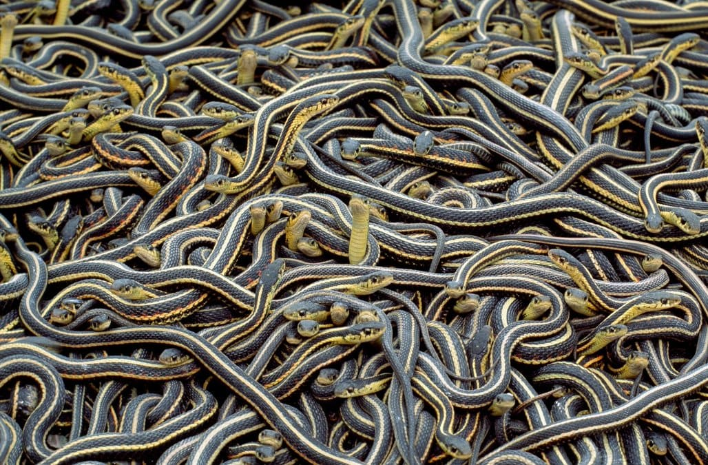 worlds biggest snake